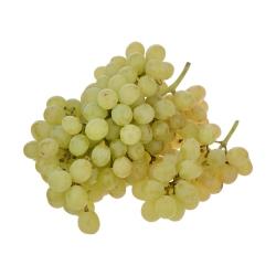انگور بی دانه سفید بلوط – 500 گرم