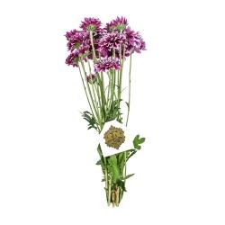 دسته گل داودی مینیاتوری بنفش هیمان کد 1067