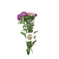 دسته گل قرنفول بنفش هیمان کد 1065