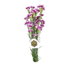 دسته گل میخک مینیاتوری بنفش هیمان کد 1076