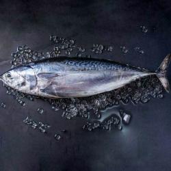 فیله ماهی تن هوور تازه جنوب – 2000 گرم