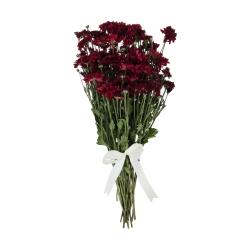 گل داوودی مینیاتوری قرمز دسته 6 عددی
