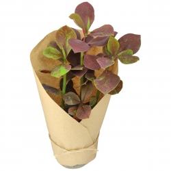 گیاه طبیعی فردوس قرمز کد yt22