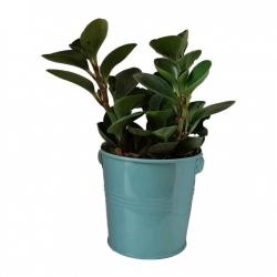 گیاه طبیعی قاشقی کد ef03