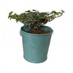 گیاه طبیعی پاپیتال کد wf03