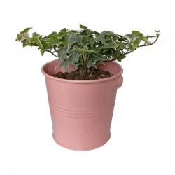 گیاه طبیعی پاپیتال کد wf06
