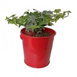 گیاه طبیعی پاپیتال کد wf07