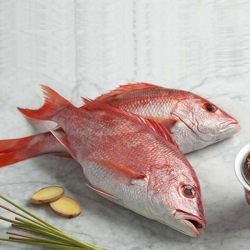 ماهی سرخو تازه جنوب – 2000 گرم