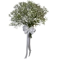 شاخه گل جیبسی فیلا دسته 20 عددی