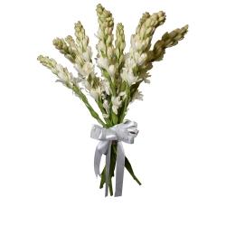 شاخه گل مریم دسته 15 عددی